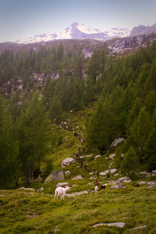 Alpe-Naucal-2014-1
